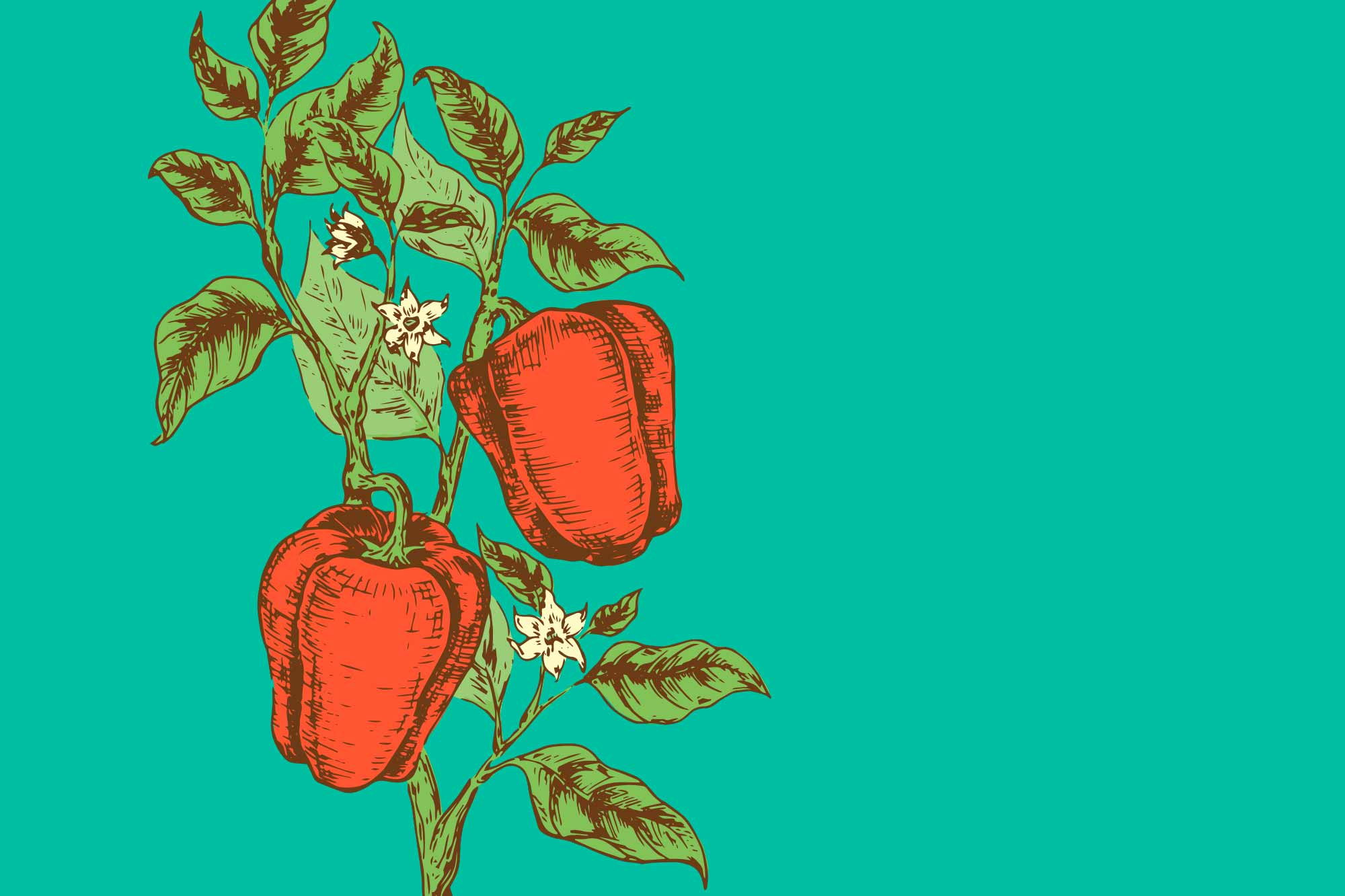 pimiento de fresno de la vega rojo